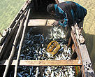In some parts of Mozambique unsustainable fishing is leading to diminishing fish harvests.