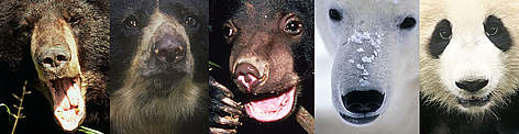 Image compilation showing 5 bear species to illustrate the diversity of life (biodiversity) rel=
