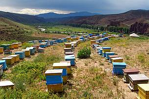 Bee-keeping farm in Nerkin Hand Community
