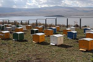 Beehives in Lake Arpi National Park