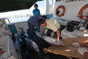 Onboard tuna fishery observers heroes of the seas wwf for Freund s fish