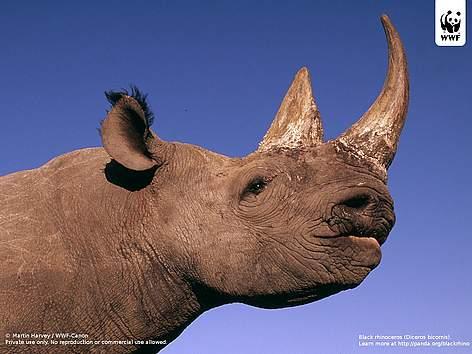Wallpaper gallery | WWF
