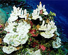 Bleaching is one of the most visually dramatic effects of climate change on coral reefs - the most biologically diverse ecosystems of the ocean.