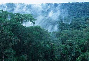 Tropical moist rainforest, western Congo Basin.