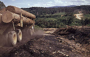 EU and Australia outlaw illegal timber imports