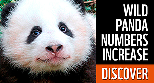 Clic to discover the results of the last panda survey in China