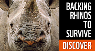 Clic to discover how WWF is working to protect rhinos in Africa and Asia