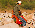 Cattle ranching in the Pantanal