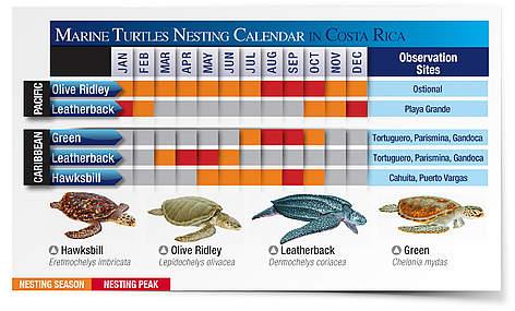 Visit nesting beaches in costa rica wwf for Costa rica fishing calendar