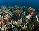 Coral reefs of Cendrawasih Bay