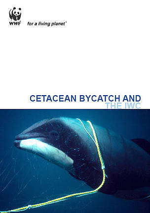 Report: Cetacean bycatch and the IWC