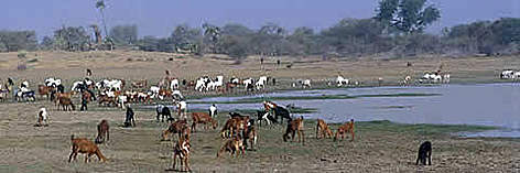 "National Park ""Protected"" wetland in Chad Basin National Park. rel="