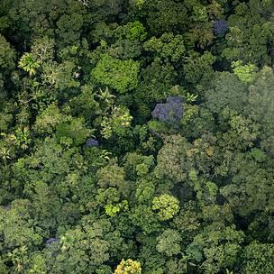 WWF invita a actores estatales y no estatales a hacer realidad el Pact