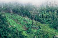 Forest slopes cleared as expanding population look for new farm land, Madagascar.