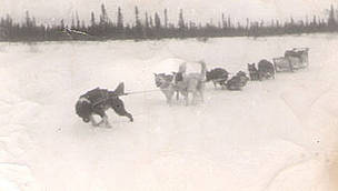 Steven Attla's dog team in Huslia, Alaska in the winter of 1948.  	© Steve Attla
