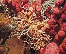 Bottom trawling is very damaging to fragile deep-sea habitats such as cold-water coral.