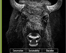 Brochure: Comeback of the European bison in the Carpathians