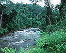 The Congo Basin rainforest is the second-largest in the world, after the Amazon rainforest.