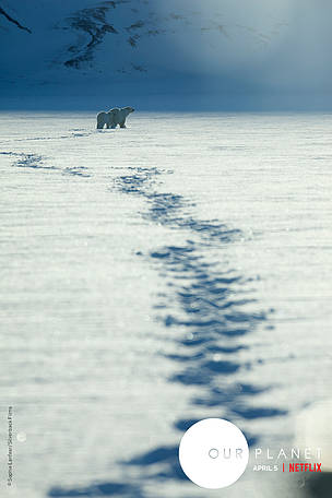 Mother polar bear with her one year old cub in tow, hunting for seals on the sea-ice around Svalbard.