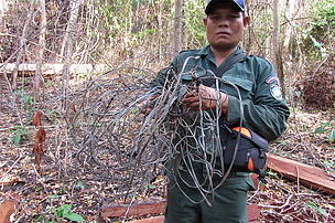 Confiscation of snares used by poachers to kill wild animals in Mondulkiri Protected Forest