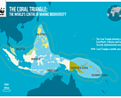 The Coral Triangle Map
