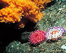 Fragile cold-water coral reefs are havens for biodiversity.