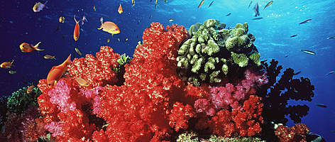 Image result for Pictures of coral reef