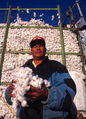Harvested cotton from the irrigated lands of the Chihuahua Desert near Chihuahua City, Chihuahua, ...  	© WWF / Edward PARKER
