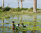 Fishing nearby the Baobab close to Morondava in Southern Madagascar