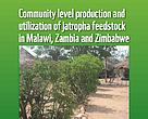 Community Jatropha publication cover