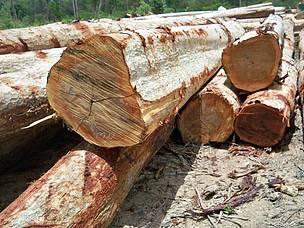 forest crime mekong region