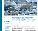 Polar Bear factsheet