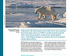 Factsheet: What WWF is doing for polar bears