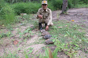 Four tortoises rescued from poachers by rangers in Mondulkiri Protected Forest