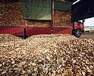 Wood chips Shandong China