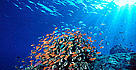 Coral Reefs in the Coral Triangle   	© WWF