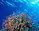 Coral Reefs in the Coral Triangle