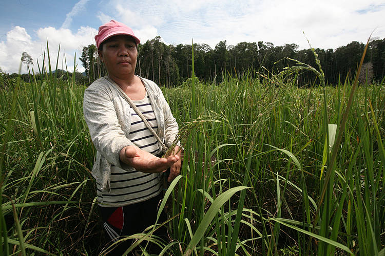 How Local Women Strengthen Food Security and Sovereignty: A Success Story from the Heart of Borneo