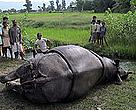 Dead rhino found in Chitwan.