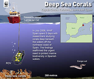 Diagram of the WWF-Spain Deep Coral Project. / ©: Nigel Allan / WWF