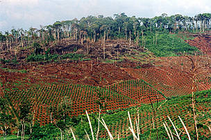 Deforestation for coffee plantations in Vietnam's Central Highlands by migrants.