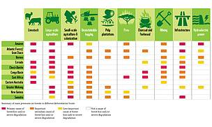 Causes of deforestation in forest loss hot spots.