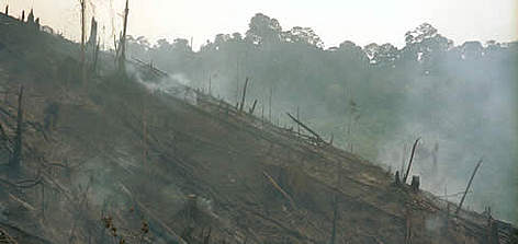 Slash and burn in Tesso Nilo, Riau Province, Sumatra, Indonesia rel=