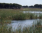 Marshlands are an important part of the Doñana National Park ecosystem. Andalusia, Spain.