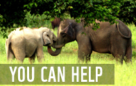 Click to Support WWF Thailand  	© WWF Thailand