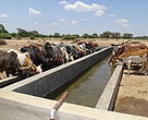 Cattle Trough at Mwakaganga