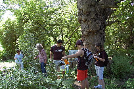 Volunteers in Zlatni Pyasatsi Nature Park cleaned near Aladzha Rock Monastery during WWF's National ... rel=