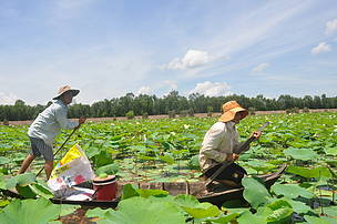 Using natural resources at Lang Sen Wetland
