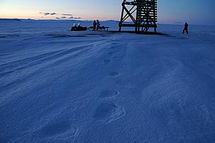 Polar bear tracks. Chukotka, Russia.      © Tom Arnbom