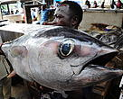 Currently, illegal unregulated and unreported fishing in the South West Indian Ocean region is estimated to result in losses of 300 to 400 million USD per year.